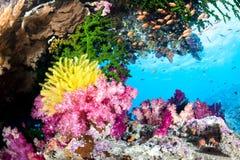 异乎寻常的珊瑚礁 库存图片