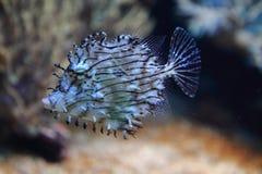 异乎寻常的珊瑚鱼 图库摄影