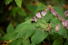 异乎寻常的花和土蜂 库存图片