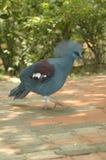 异乎寻常的蓝色野生生物鸟 图库摄影