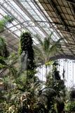 异乎寻常的被盖的庭院,有棕榈和薄雾的 库存图片