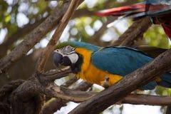 异乎寻常的金刚鹦鹉鸟 库存照片