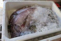 异乎寻常的鱼海运 库存照片