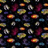 异乎寻常的鱼,海珊瑚 霓虹照明设备无缝的背景 水彩 库存照片