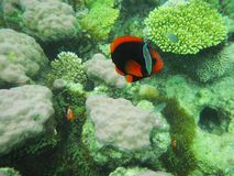 异乎寻常的鱼, El Nido,菲律宾 免版税库存照片