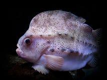 异乎寻常的鱼 免版税库存照片