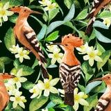 异乎寻常的鸟、叶子和花的无缝的样式 库存图片