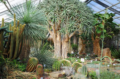 异乎寻常的仙人掌在一个植物园里 免版税图库摄影