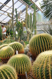 异乎寻常的仙人掌在一个植物园里 免版税库存照片