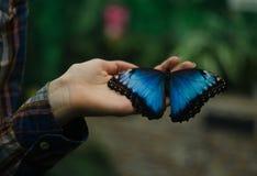 异乎寻常的蝴蝶 免版税库存图片