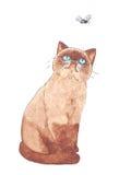 异乎寻常的Shorthair猫和飞行 库存照片