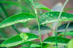 异常危险和困难的雨下落 免版税库存图片