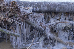 异常的冰在森林小河下落的分支计算 免版税库存图片