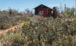 异常的前院,氯化物,亚利桑那 免版税库存照片