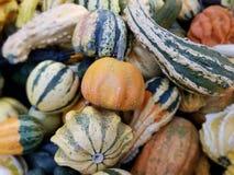 异常的南瓜,品种南瓜,农夫`市场 免版税库存图片