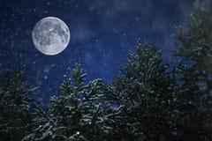 异常的月亮在冬天森林里 图库摄影