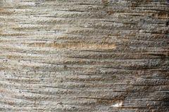 异常的木纹理,样式,背景 免版税库存图片
