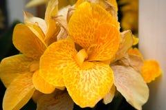 异常的橙色仙人掌 免版税库存图片