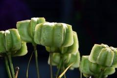 异常的绿色花 库存图片