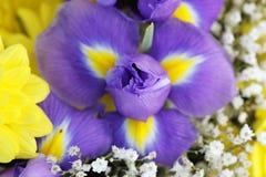 异常的美好的嫩虹膜和黄色花背景 免版税库存照片
