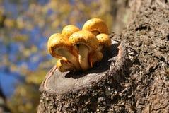 异常的蘑菇 库存图片