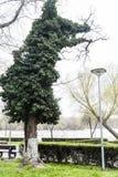 异常的结构树 库存照片