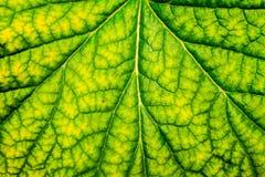 异常的绿色植物 免版税库存图片