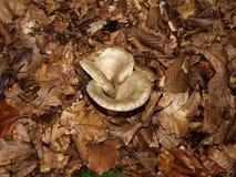 异常被熔化的蘑菇盖帽 免版税库存照片
