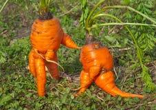 异常7棵的红萝卜 免版税图库摄影