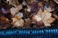 弄湿下落的叶子 免版税库存图片