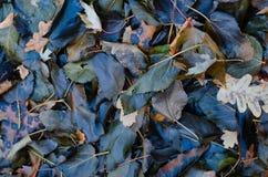 弄湿下落的黑暗的叶子 库存图片