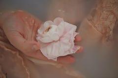 弄湿乳脂状的鞋带和花浮游物在水中一种乳状颜色 柔软和秀丽的感觉 免版税库存照片