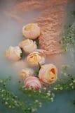 弄湿乳脂状的鞋带和花浮游物在水中一种乳状颜色 柔软和秀丽的感觉 库存图片