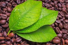 弄湿叶子和在背景的咖啡豆 免版税图库摄影