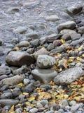 弄湿叶子在海滩 免版税图库摄影