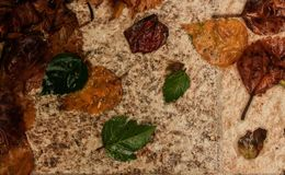 弄湿在地面上的叶子 免版税库存照片
