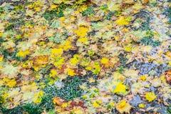 弄湿在地面的叶子 库存图片