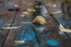 弄湿在老被弄皱的蓝色桌上的下落的叶子 免版税图库摄影