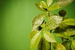 弄湿在绿色背景的叶子 免版税库存图片