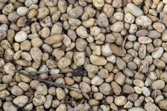 弄湿铁路石碴被碰撞的石头,并且小在小雨以后烘干叶子 库存照片