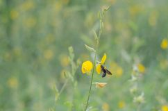 弄糟黄色叶子是绿色叶子自然地是beautifu的蜂 库存照片