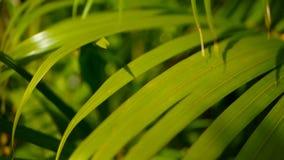 弄脏与太阳光,与bokeh的抽象自然本底的热带绿色棕榈叶 Defocused茂盛植物 股票视频
