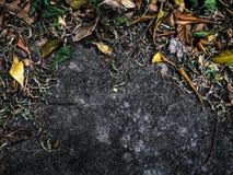弄脏和与许多的叶子地板纹理和谐的颜色在地球自然背景图片的 库存照片