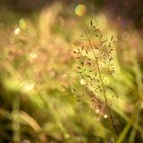 弄脏自然绿色公园有bokeh太阳光摘要背景 复制旅行冒险和环境概念空间  葡萄酒t 库存图片