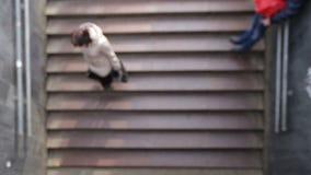 弄脏走地铁车站台阶的人  股票录像