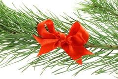 弓分行冷杉红色结构树 图库摄影