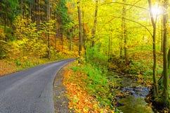 引导通过自然公园的道路 库存照片
