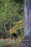 弗吉尼亚水 库存照片