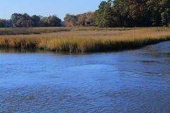 弗吉尼亚沼泽地 免版税库存照片