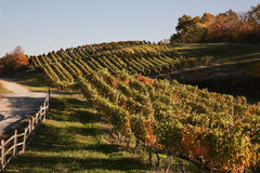 弗吉尼亚酒乡在秋天 库存照片